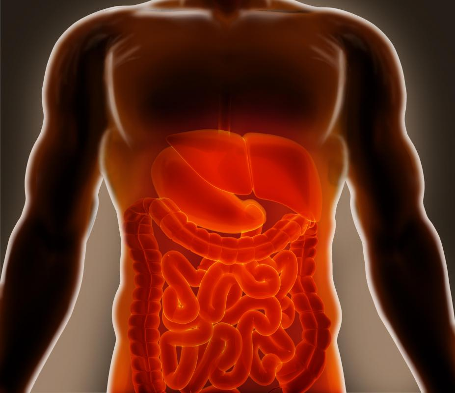 The lymphatic system absorbs fatty acids from the digestive system and transports them to the bloodstream.