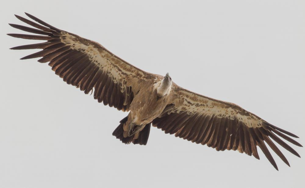 Vultures play an important role in nature by consuming dead animals that could spread infection to people and pets if left alone.