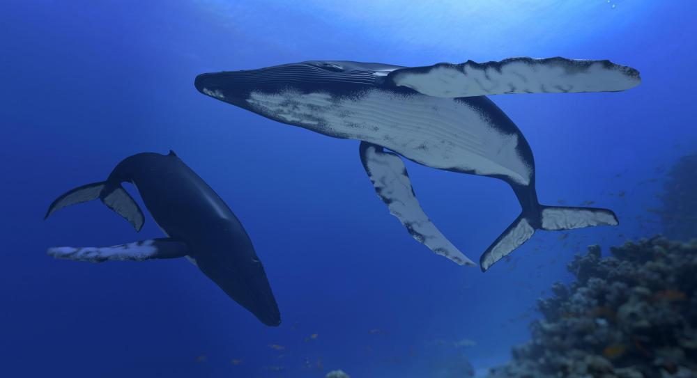 Whales evolved in the early part of the Paleogene Period.