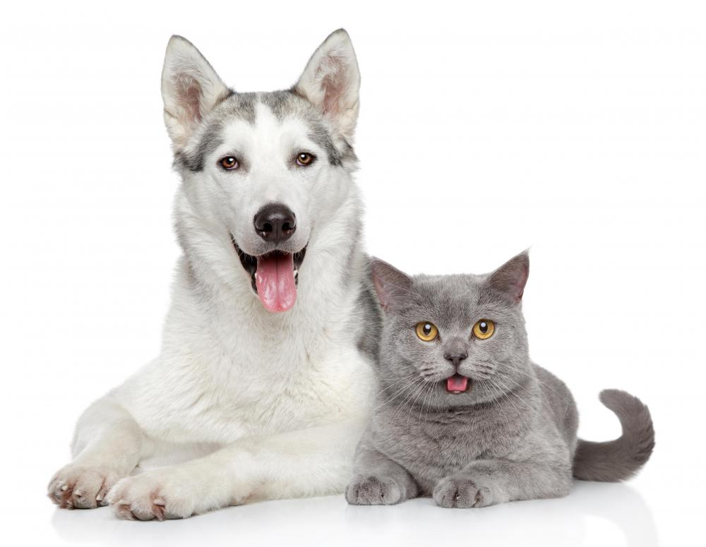 It Is Believed That Cats And Dogs See Mostly Grays Yellows Blues
