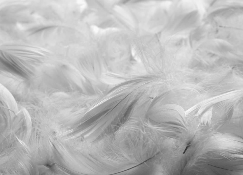 Down Comforters May Cause An Allergic Reaction In People Who Are Allergic  To Feathers.