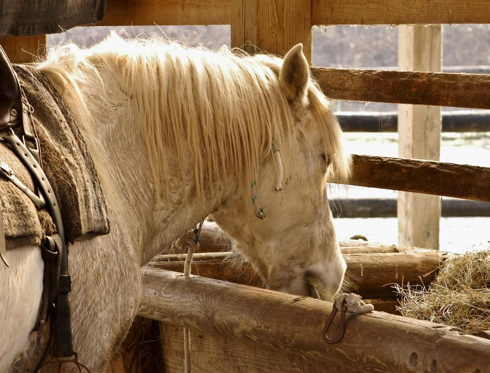 Horses the feed from the same bowls can spread wart-causing viruses.