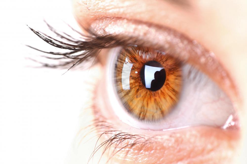 The sclera, or white part of the eye, is part of the fibrous layer of eye tissue.