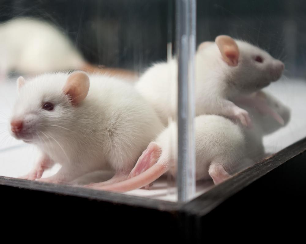 DMCM has been used in studies on how panic and anxiety interact with the ability for rats to perform cognitive tasks.
