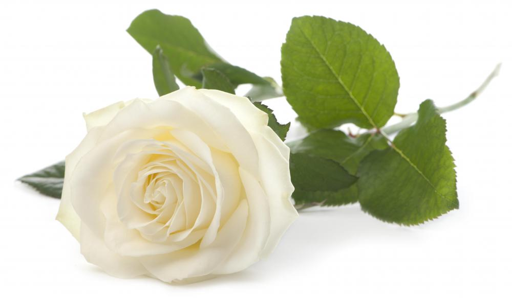 White roses symbolize purity.