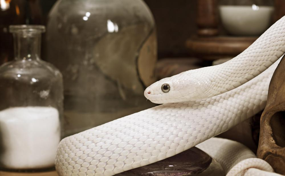 Some types of snakes can be garden pests.