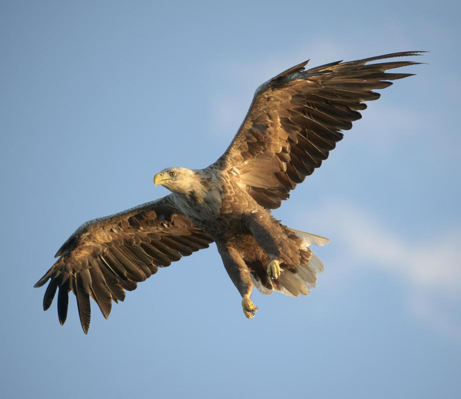 Eagles are known for having sharp vision.