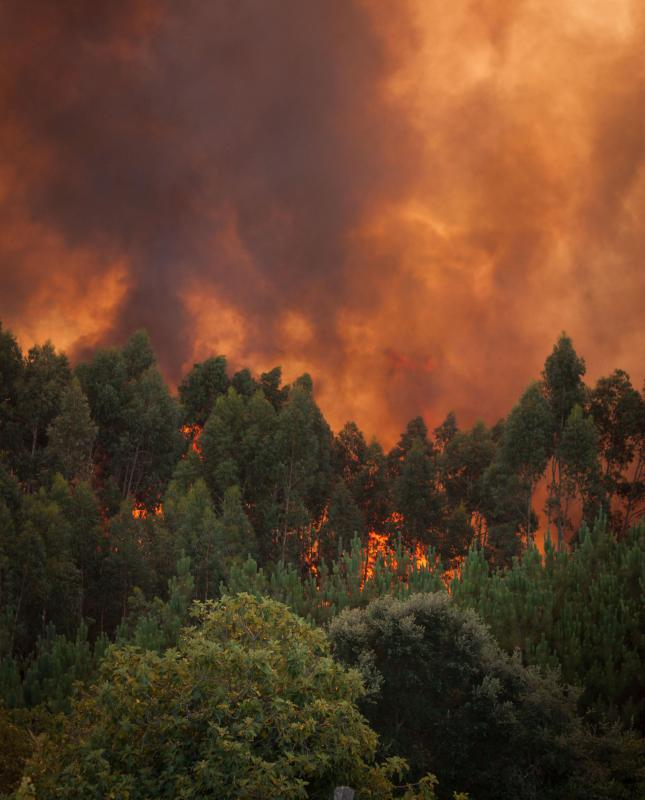 Wildfires sometimes cause firestorms.