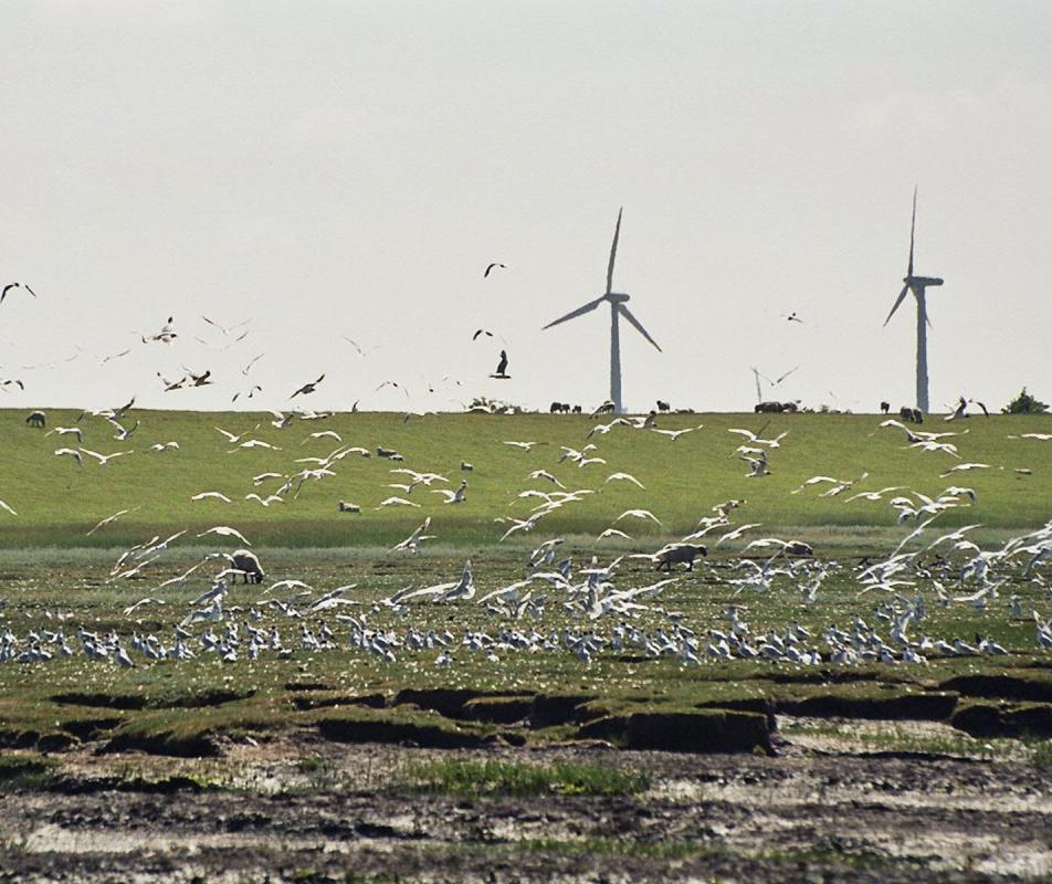 A big disadvantage of wind power is the threat they pose to migratory birds that are accustomed to having open air space in which to fly.