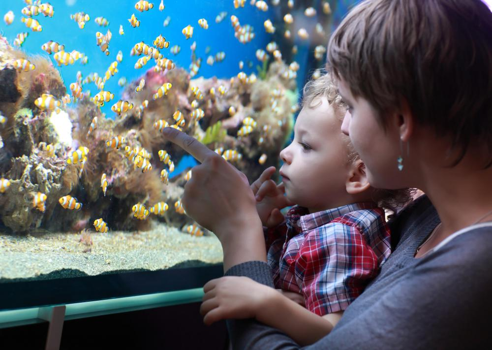 A three-dimensional (3D) aquarium background is a decorative addition to an aquarium designed to add depth and interest to the aquarium.