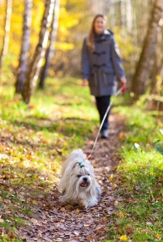 Experience walking dogs may be beneficial to securing a job as a veterinary assistant.