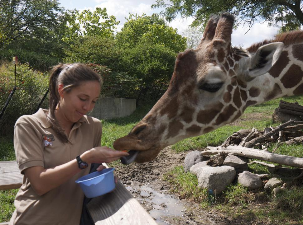 Prior experience at a zoo is one of the required qualifications of a zookeeper.