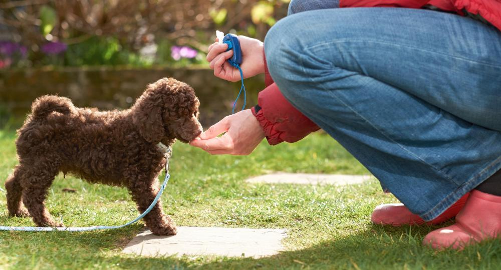 A dog must first be properly trained to walk on a lead before a bike leash can be used.