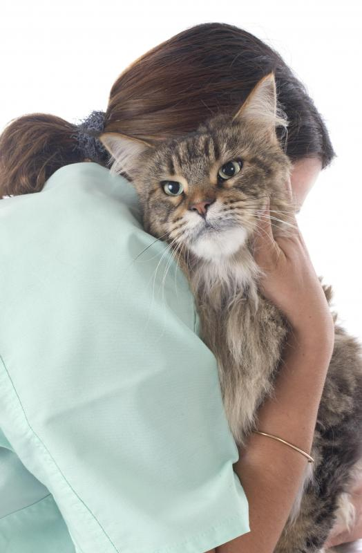 Signs of an allergic reaction to cats are similar to a common cold.