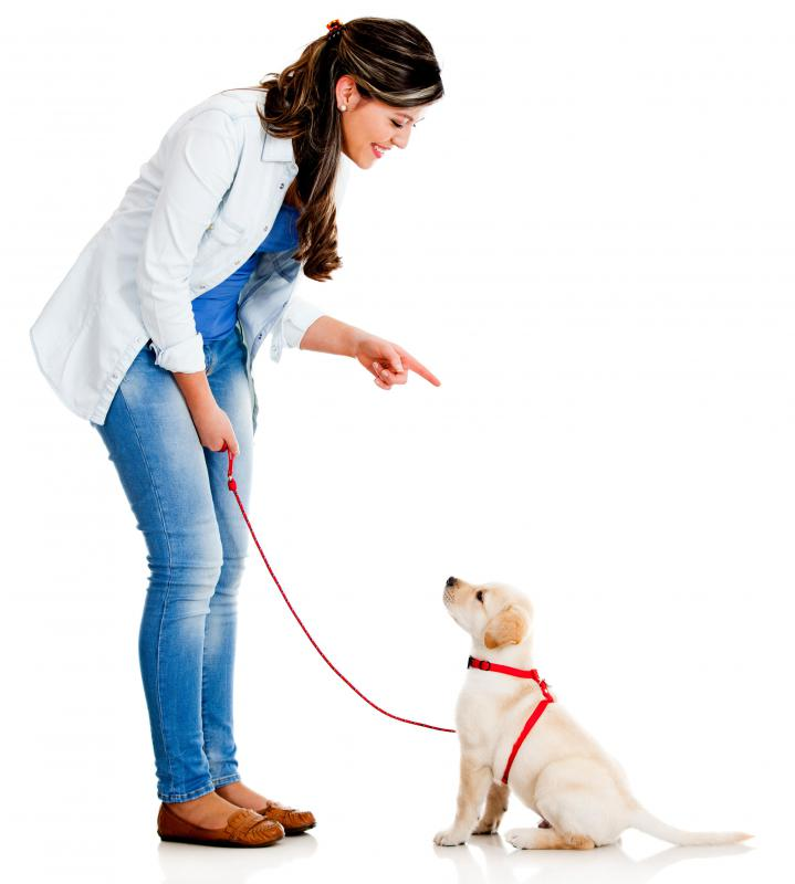 A dog trainer works closely with canines to help them develop good behaviors.