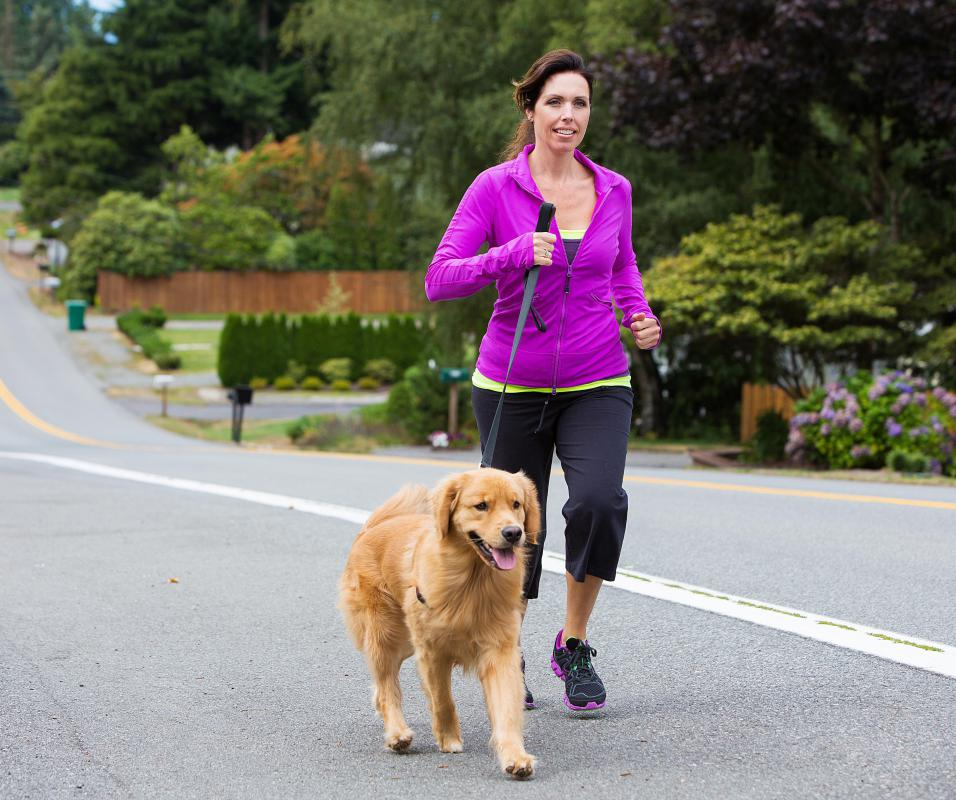 Daily walks can help prevent canine obesity.
