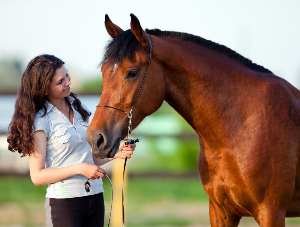 Horses are always secured when riders tack them up, typically with a halter, a plain headstall with no bit, attached to a line which is used to tie the horse.