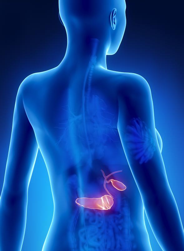 The pancreas is found below the stomach and beside the small intestine.