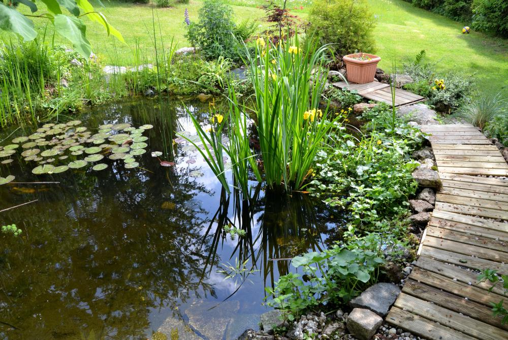 Choosing plants that thrive in aquatic environments is essential for a water garden.
