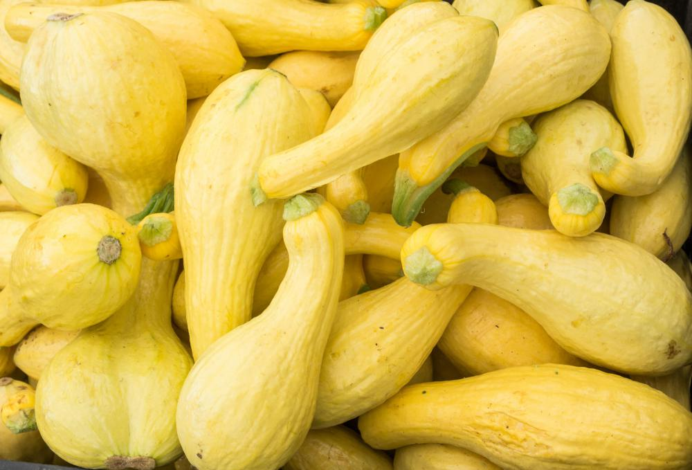Crookneck squash can be cooked or eaten raw.