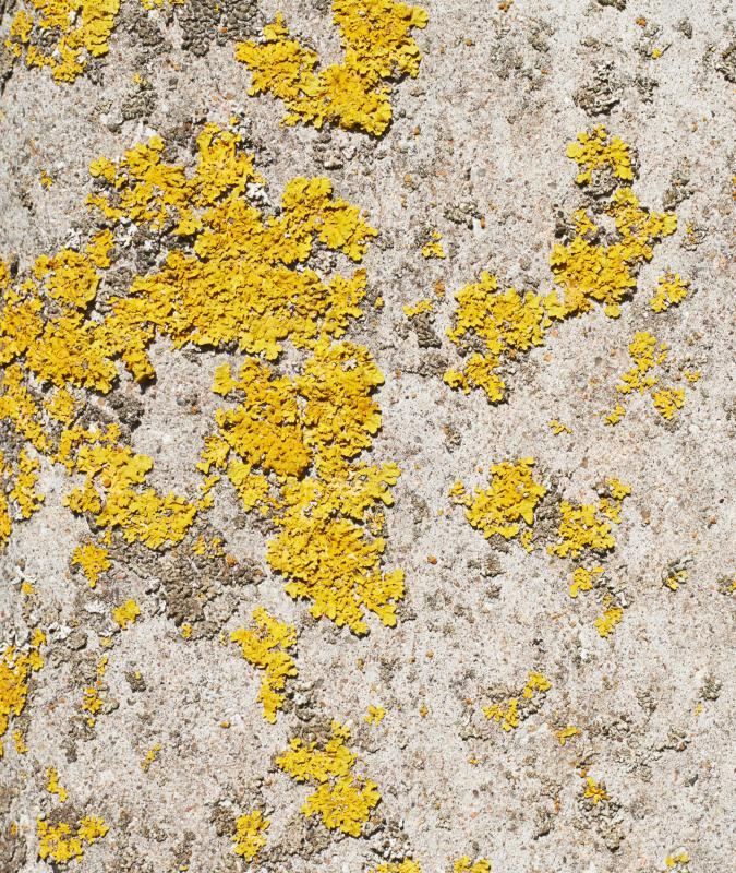 Yellow Mold Has A Distinctive Bright Color And Most Of It Is Toxic